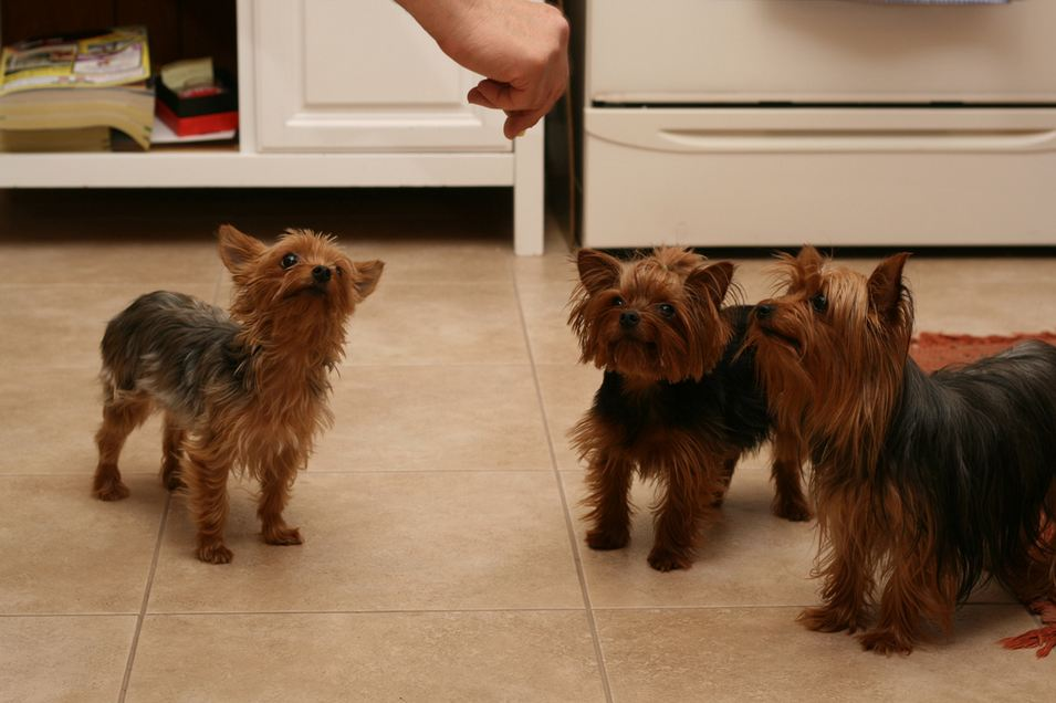 Dogs Waiting For Treat